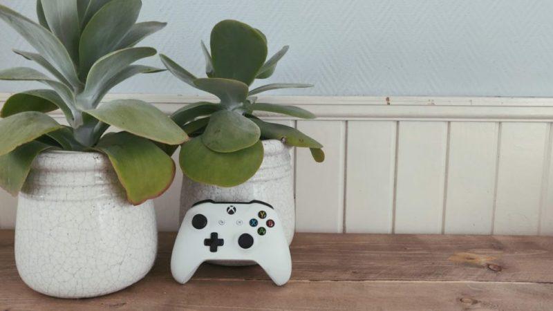 Plantes d intérieur adaptées aux joueurs